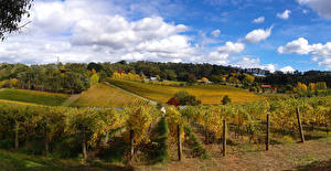 Фото Австралия Поля Небо Виноградник Кусты Облачно Ashton Valley Adelaide Hills Природа