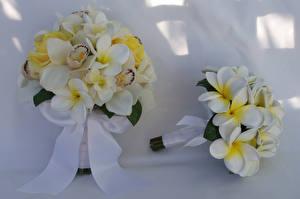Фотография Букеты Плюмерия Орхидеи Вдвоем Цветы