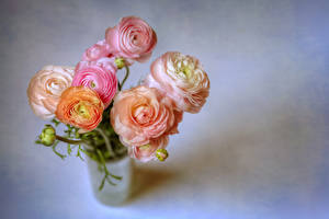 Фотографии Букеты Лютик Серый фон Розовый Цветы
