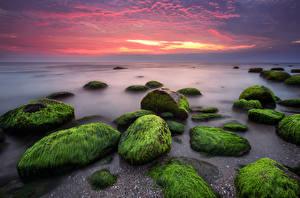 Фотография Болгария Побережье Море Рассветы и закаты Камень Небо Мох