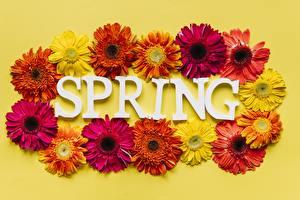 Фото Хризантемы Весна Цветной фон Цветы