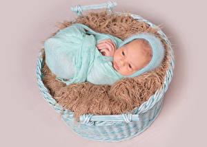 Фотография Младенцы Младенца Корзина ребёнок