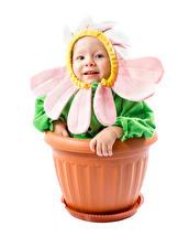 Фото Оригинальные Ромашки Белый фон Грудной ребёнок Дизайн Забавные Цветочный горшок Ребёнок