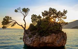 Фото Хорватия Рассветы и закаты Залив Утес Деревья Лучи света Brela