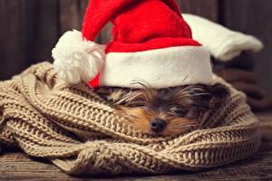 Картинки Собаки Рождество Шапки Шарф Животные