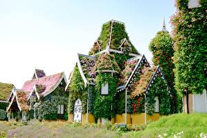 Фото Дубай Сады Объединённые Арабские Эмираты Дома Дизайн Miracle Garden Природа