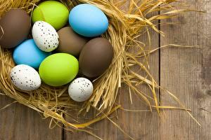 Фотография Пасха Яйца Гнездо Пища