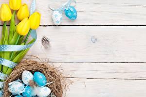 Фотографии Пасха Тюльпаны Яйца Гнездо Доски Цветы