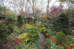 Обои Англия Сады Тюльпаны Мосты Walsall Garden Природа