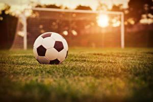 Фотографии Футбол Мяч Газон