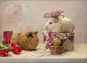 Фотография Морские свинки Тюльпан Вдвоем Корзина Ветки