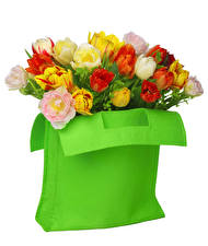 Картинки Сумка Тюльпаны Белый фон Цветы