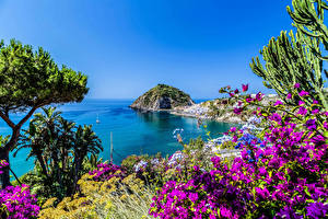 Обои Италия Побережье Бугенвиллия Залив Ischia Природа