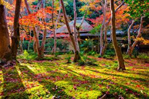Картинки Япония Киото Осень Парки Деревья