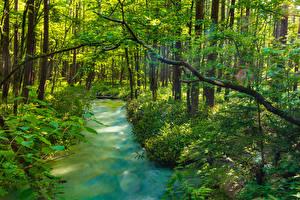 Фотография Япония Парки Пруд Деревья Кусты Kamikochi Nagano Природа
