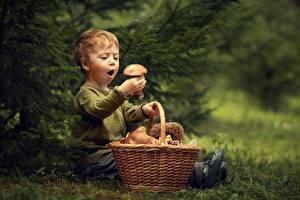 Фотографии Грибы Мальчики Корзина Эмоции изумление Ребёнок