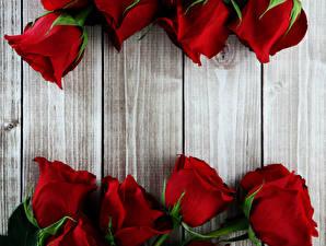 Картинки Розы Вблизи Доски Красный Цветы