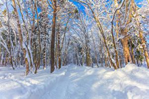 Картинки Россия Леса Зима Деревья Снег Yuzhno-Sakhalinsk