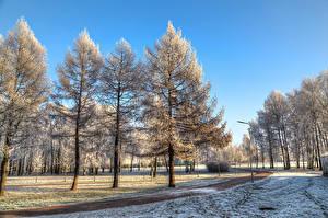 Фотография Россия Санкт-Петербург Парки Зимние Деревья Снег Park Esenina Природа