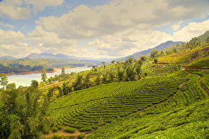 Фотографии Шри-Ланка Пейзаж Поля Реки Nuwara Eliya Природа