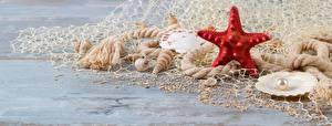 Картинка Морские звезды Ракушки Жемчуг