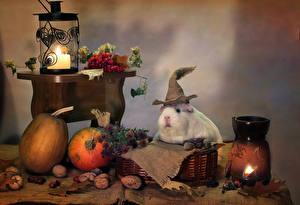 Картинка Натюрморт Морские свинки Тыква Орехи Ягоды Фонарь Листья Еда