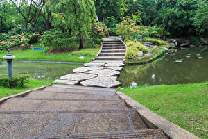 Фотографии Таиланд Бангкок Парки Пруд Лестница Природа