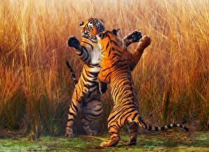 Фото Тигры Двое Сражение Животные