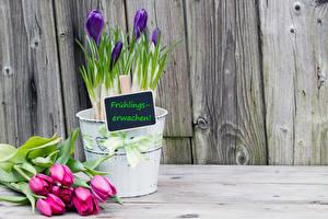 Обои Тюльпаны Шафран Доски Цветы