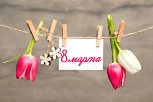 Фотографии Тюльпаны Международный женский день Прищепки Цветы