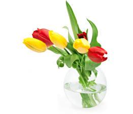 Картинка Тюльпаны Белом фоне Ваза цветок