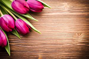 Картинки Тюльпаны Доски Красный Цветы