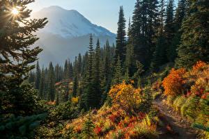 Обои Штаты Парки Осенние Горы Ель Mount Rainier National Park