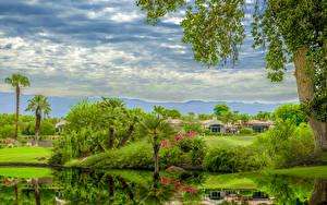 Картинки США Пруд Калифорния Кусты Пальма Rancho La Quinta Природа