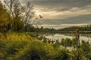 Картинка Америка Речка Птица Небо Траве Chisago Minnesota Природа