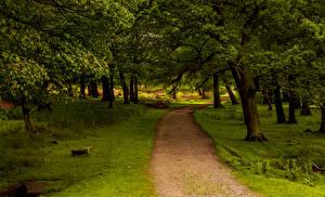 Фото Великобритания Парки Деревья Тропинка Peak District National Park