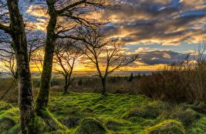 Картинки Великобритания Рассветы и закаты Деревья Трава Мох Облака Toor Northern Ireland