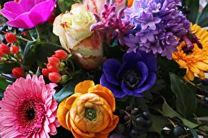 Фотографии Ветреница Герберы Розы Лютик Гиацинты Цветы