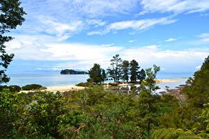 Фотографии Австралия Парки Побережье Кусты Tasman National Park Природа
