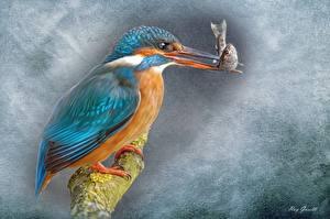 Картинки Птицы Обыкновенный зимородок Рыба Живопись Рисованные Клюв