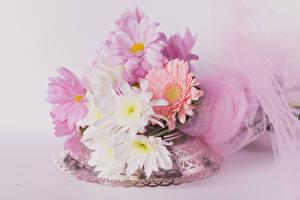 Фотографии Букеты Хризантемы Цветной фон Цветы