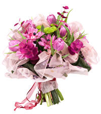 Картинка Букеты Орхидеи Белый фон Ленточка Цветы
