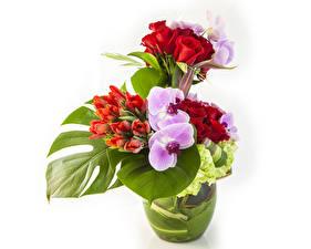 Фотографии Букеты Розы Тюльпаны Орхидеи Белый фон Цветы