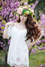 Картинки Шатенка Платье Волосы Девушки