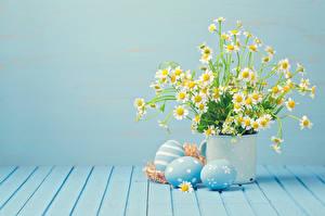 Обои Ромашки Пасха Букеты Цветной фон Доски Яйца Цветы картинки