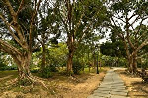 Картинки Китай Парки Деревьев Тропа Macao Природа