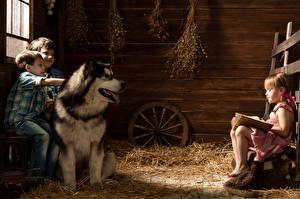 Фото Собаки Аляскинский маламут Втроем Мальчики Девочки Сено Ребёнок Животные