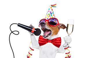 Обои Собаки Праздники Бабочки Микрофон Джек-рассел-терьер Очки Бокалы Забавные Белый фон