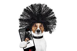 Картинка Собаки Белый фон Джек-рассел-терьер Смешные Волосы Смартфон Селфи Животные