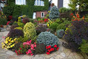 Фотография Англия Сады Розы Кусты Walsall Garden Природа
